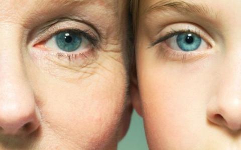 Эластин - белок молодости и упругости кожи